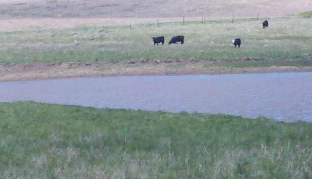 Fruits of labor!  Water in 6 ponds for rancher near Ellsworth. Ducks too!